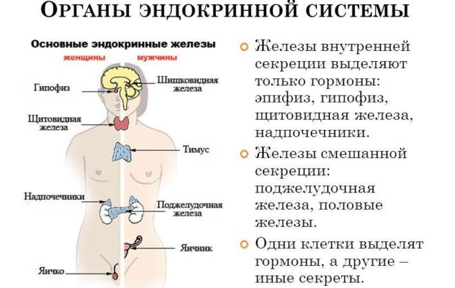 Эндокринолог что лечит у мужчин